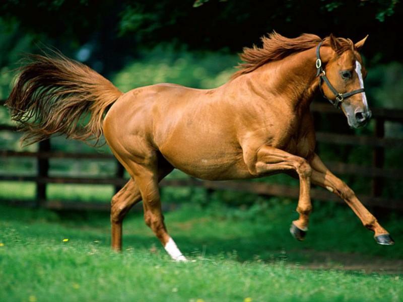 как измерить вес лошади