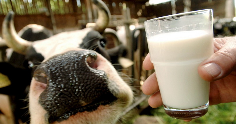 Как увеличить плотность молока