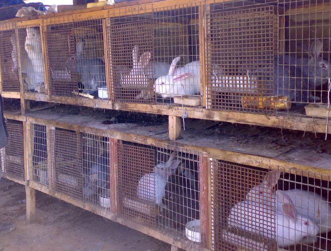кролики в клетках