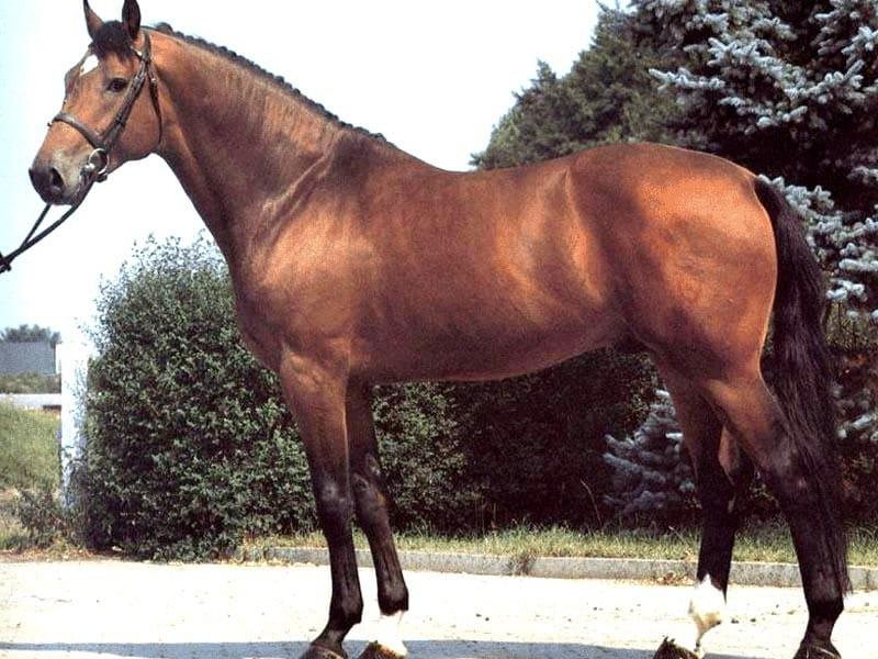 как измерить вес лошади своими руками