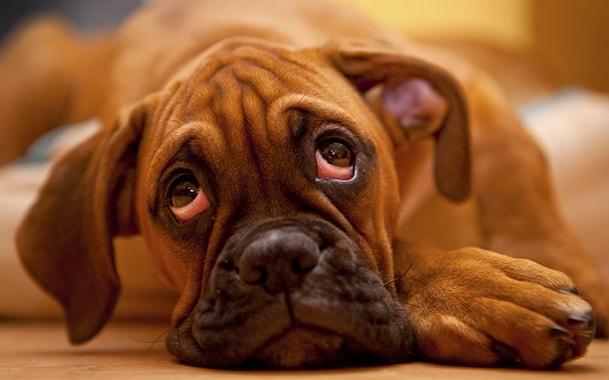 Симптомы цистита у животных, лечение и профилактика || Цистит у коровы лечение